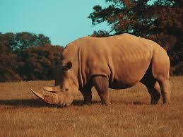 Rhinoceros 7.8.21196.05001 Full Crack + License Key