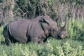 Rhinoceros 7.8.21196.05001 Full Crack + License
